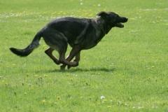 Briga Schutzhund 3 April 2009 Bild Nr. 12