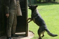 Briga Schutzhund 3 April 2009 Bild Nr. 16