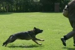 Briga Schutzhund 3 April 2009 Bild Nr. 17