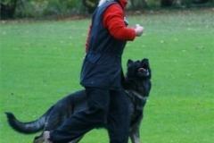 Briga Schutzhund 3 Oktober 2008 Bild Nr. 1