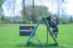 Briga Schutzhund 3 Oktober 2008 Bild Nr. 3