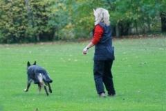 Briga Schutzhund 3 Oktober 2008 Bild Nr. 7