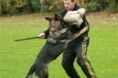 Briga Schutzhund 3 Oktober 2008 Bild Nr. 10
