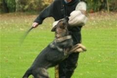 Briga Schutzhund 3 Oktober 2008 Bild Nr. 9