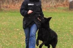 Inka Schutzhund 1 Dezember 2009 Bild Nr. 1