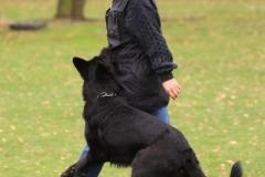Inka Schutzhund 1 Dezember 2009 Bild Nr. 2