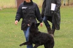 Inka Schutzhund 1 Dezember 2009 Bild Nr. 4