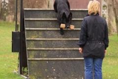Inka Schutzhund 1 Dezember 2009 Bild Nr. 6