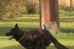 Inka Schutzhund 1 Dezember 2009 Bild Nr. 8