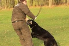 Inka Schutzhund 1 Dezember 2009 Bild Nr. 10