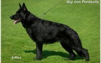 itzy-von-pentavita-1