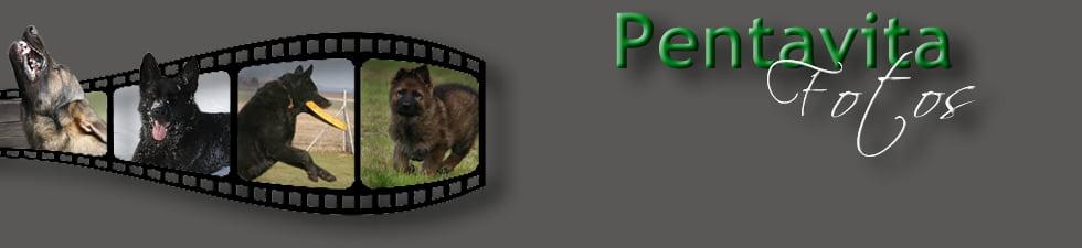 Kopfbild des Fotoalbums des Schäferhund Zwingers