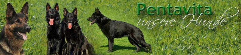 Kopfbild der unsere Hunde Seiten - Übersicht