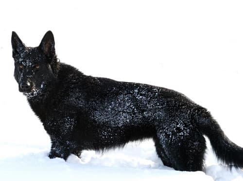 Maiga von Casamano im Schnee